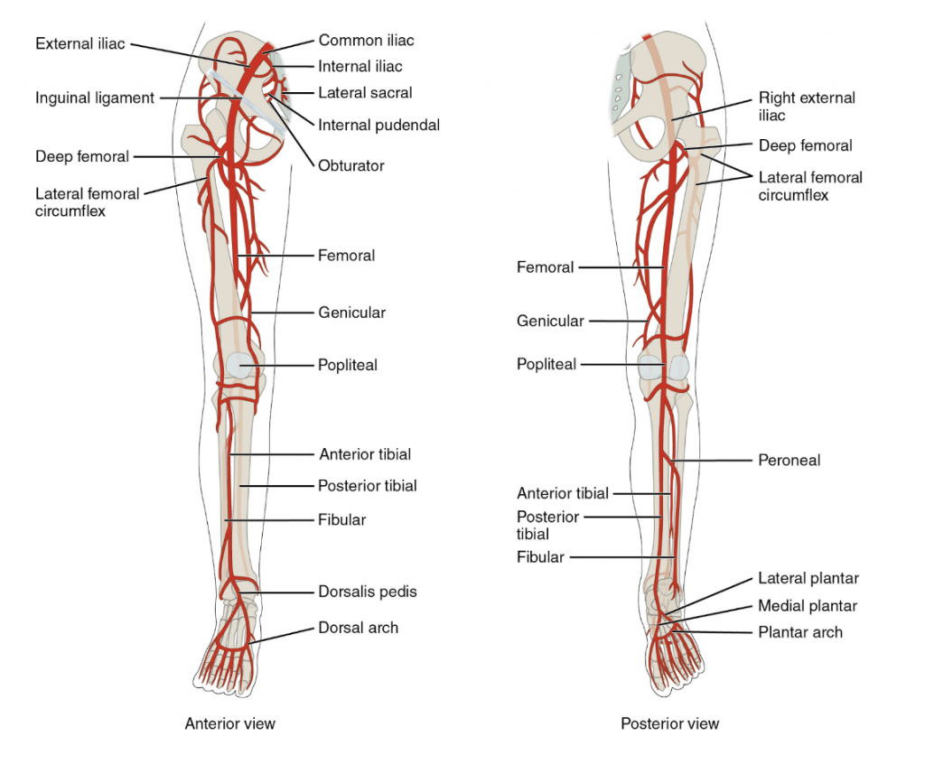 suspended amazon account femoral artery